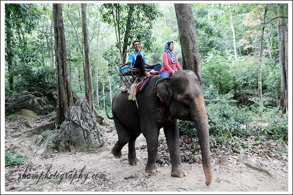 elephant-trekking-krabi02