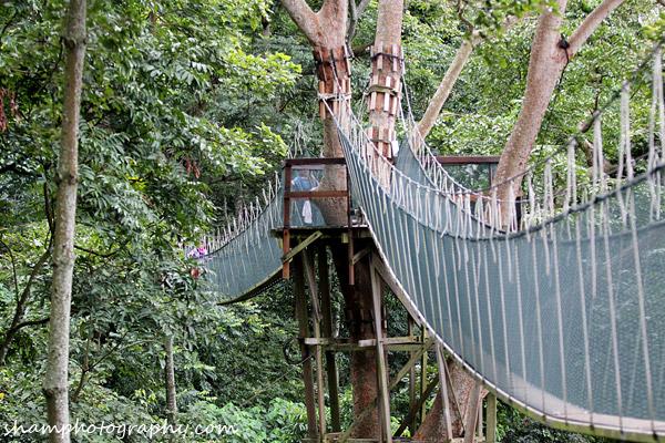 frim-kepong-hutan-simpan-bukit-lagong-alamsemulajadi-nature-hiking-canopy-walk
