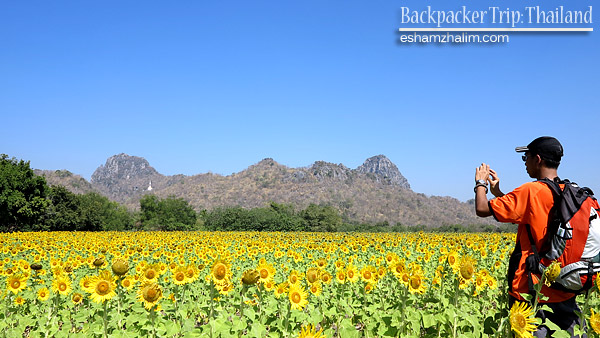 backpacker-trip-thailand-bangkok-hatyai-sunflower-farm-bunga-matahari-lopburi-the-monkey-city-visit-thailand-eshamzhalim
